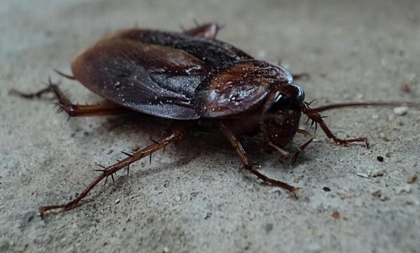 Cockroach Service