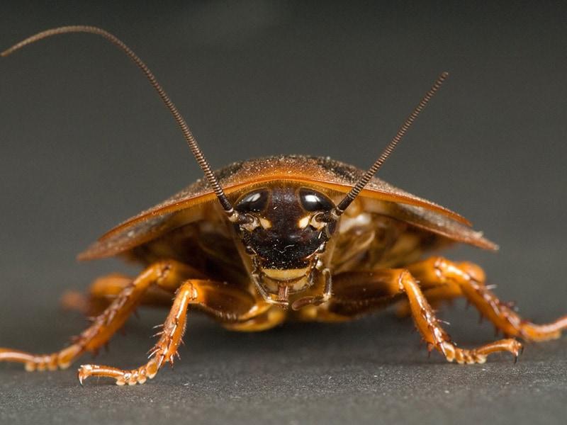 Pest Control Service - Cockroach Service